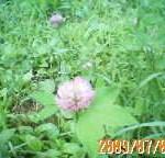 200907030921.jpg